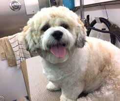 happy dog pet grooming in lancaster pa