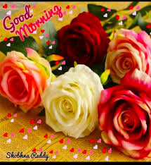 Good Morning With Beautiful Colourful Roses Good Morning Good