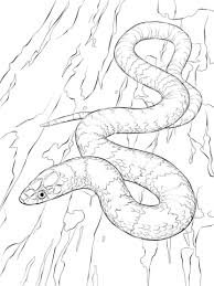 Small Picture Snakes coloring pages Free Coloring Pages