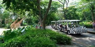 singapore zoo tickets s