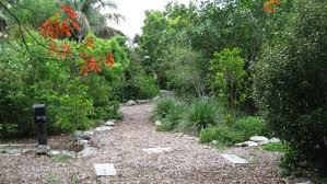 we love our native plants the key west tropical forest botanical garden