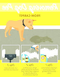 best area rugs for pets pet proof rugs pet proof area rugs dog chew proof rugs