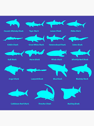 Types Of Sharks Chart Types Of Sharks Shark Chart Tote Bag