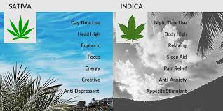 Sativa And Indica Chart How To Buy Cannabis The Differences Between Sativa Indica
