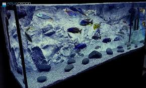 Aquarium Backgrounds Aquarium Background For A Fish Tank Modern Caprice Or Real Need