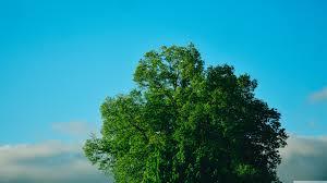 Green Tree, Blue Sky Ultra HD Desktop ...