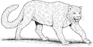 Leopard Pictures To Color With Snow Leopard Coloring Page Free
