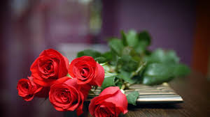 by vada heier v 75 amazing 1080p red rose pictures backgrounds