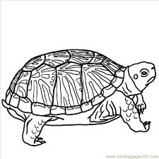 Small Picture Turtle pictures coloring free printable coloring page Ornate Box