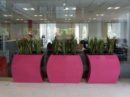 office plant displays. Wonderful Office Office Breakout Area Curvy Trough Plant Displays  See More At  Httpofficelandscapes Throughout Plant Displays _