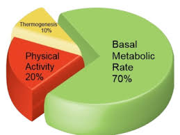 Basal Metabolic Rate Bmr Chart What Bmr Means And How To Understand It What Is Normal Bmr