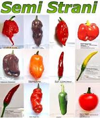 chili peppers. Modren Peppers Image Is Loading 120SeedsHOTCHILIPEPPERColl2CAROLINA To Chili Peppers E