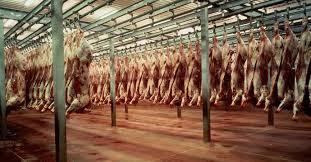 Znalezione obrazy dla zapytania slaughterhouse