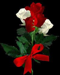 """Képtalálat a következőre: """"szép rózsa kép"""""""