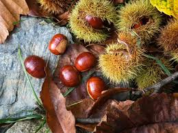 Nut Identification Chart How To Identify Nuts And Seeds From British Trees