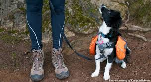 a young dog with a dog pack on staring up at its hiking companion