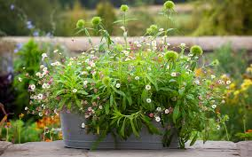 give your summer pots the perfect meld of showiness and shape using one classic planting forumla