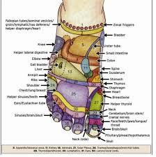 Cranial Reflexology Chart Reflexology Chart Foot Reflexology Reflexology