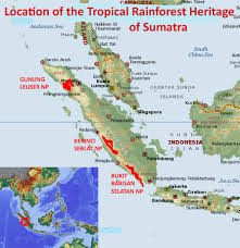 Tropical rainforests are located in tropical regions. Tropical Rainforest Heritage Of Sumatra Natural World Heritage Sites