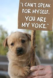 Animal Rights Quotes Best Animal Rights Quotes Youth For Action