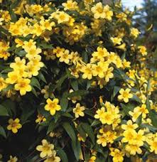 Top 10 Climbing Plants For A Small Trellis  DengardenClimbing Plant For Shade