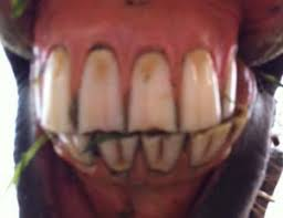 people with horse teeth. Unique Horse On People With Horse Teeth K