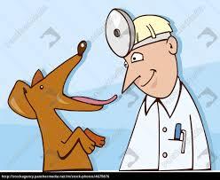 Bildergebnis für hund beim tierarzt