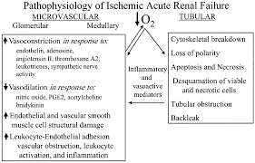 Punctual Pathophysiology Of Renal Failure Flow Chart