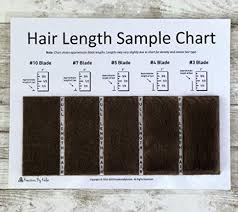 Hair Length Sample Chart Amazon Com Hair Length Sample Charts Shave Blades Brown