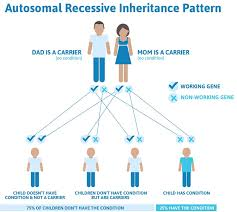 Cystic Fibrosis Inheritance Pattern Cool Cystic Fibrosis Genetics Juvecenitdelacabreraco