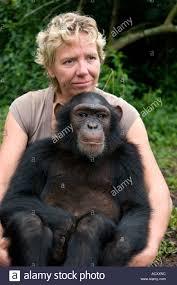 Debbie Cox Geschützt Schimpanse Sitzt Am Schoß Von Debbie Cox Von Jane Goodall