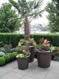 Small Picture Desert Xeriscape and Rock Gardens Gardens Potted trees and