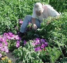 craig gardening fruit