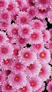 awesome pink flowers wallpaper iphone best iphone wallpaper