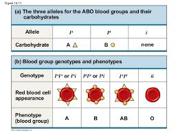 Abo Blood Type Chart Advanced Biology Blog Abo Blood Types