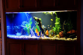 Interior : Attractive Modern Living Room Designs Fish Tanks Tank .