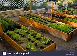 raised vegetable garden beds lasagne garden with screened covers to prevent pests greater sudbury ontario