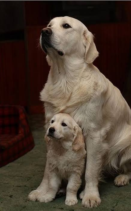 Image result for mom and baby dog""