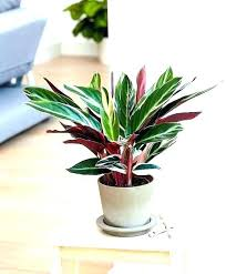 indoor low light plants best houseplants for low light low light houseplants best low light plants