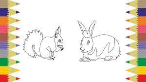Squirrel Coloring Pages How To Rabbit Coloring On Coloring Rabbit