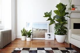 Plants In Living Room Impressive Inspiration