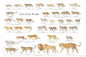 Cats Of The World Or Pet Wishlist Or Even Just A Hug