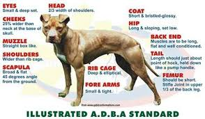 Dog Feeding Chart Why Does My Dog Eat Its Own Feces Pit