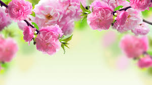 Image result for hoa xuân đẹp