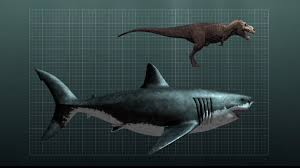 megalodon shark compared to t rex. Fine Shark PictureSize Comparison Between A Megalodon Shark And TRex  Compared To T Rex Reddit