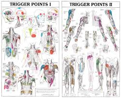27485 Trigger Points Charts Fysiomed