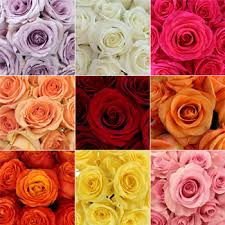 Rose Color Meanings 12 Shades What They Symbolize