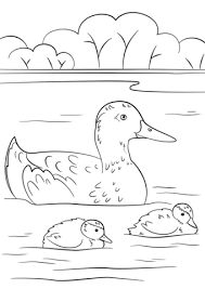 Small Picture Duckling Coloring Page Fabulous Duckling Learn To Fly Coloring
