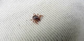 Cdc Tick Identification Chart Ticks In Florida Florida Hikes