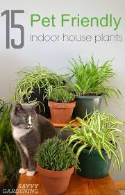 Plants and pets don't always get along, but some indoor plants can be